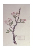 Apple, Walberswick, 1915 Giclee Print by Charles Rennie Mackintosh