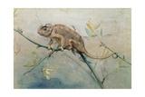 Chameleon, 1901 Giclee Print by Edwin John Alexander