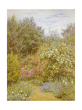 Roses in a Surrey Garden Giclee Print by Helen Allingham