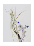 From the Dunes (Sea Holly, Gorse, Grass, Reed, Sea Lavender), 1999 Giclee Print by Rebecca John