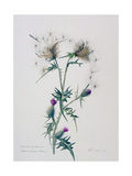 Exploding Thistle, 1999 Giclee Print by Rebecca John