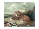 An Old Newfoundland Dog Giclee Print by John Frederick Lewis
