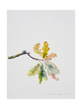Oak Leaves, 2001 Giclee Print by Rebecca John