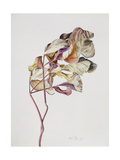 November Peony Leaves, 1999 Giclee Print by Rebecca John