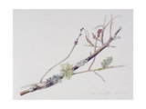 Lichens on Cherry Tree, 2001 Giclee Print by Rebecca John
