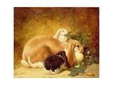 Rabbits, 1852 Giclee Print by John Frederick Herring Jnr