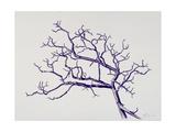 Old Hawthorn, 2000 Giclee Print by Rebecca John