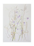 Harebells in Grass, 2003 Giclee Print by Rebecca John