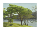 Pine Trees, Usk Reservoir, 2005 Giclee Print by Peter Breeden