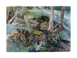 Study of Rocks and Ferns in a Wood at Crossmount, Perthshire, 1843 Giclee Print by John Ruskin