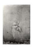 Male Nude Giclee Print by  Michelangelo Buonarroti
