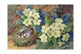 Primroses and a Bird's Nest Giclee Print by Thomas Frederick Collier