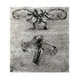 Study of a Dragonfly Giclee Print by  Leonardo da Vinci