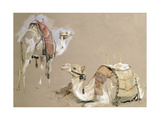 Camel Studies Giclee Print by John Frederick Lewis