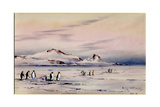 'The Discovery Winter Quarters', c.1901-04 Giclee Print by Edward Adrian Wilson