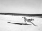 Animal Talk 21 Photographic Print by Jaschi Klein