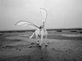 Pegasus 2 Photographic Print by Jaschi Klein