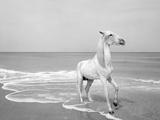 Pferd-Traum 5 Photographic Print by Jaschi Klein
