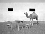 Animal Talk 11 Photographic Print by Jaschi Klein