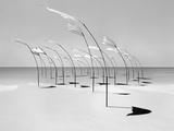 Windblumen 2 Photographic Print by Jaschi Klein