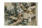 Study for Tree in 'The Rookery', c.1854 Giclee Print by William James Blacklock