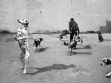 Animal Talk 6 Photographic Print by Jaschi Klein