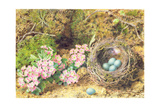 Bird's Nest and Blossom Giclee Print by John Sherrin