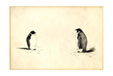 Emperor Penguins Giclee Print by Edward Adrian Wilson