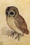 Screech Owl Albrecht Durer Plastic Sign Kunststof bord