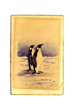 Emperor Penguins, 1904 Giclee Print by Edward Adrian Wilson