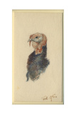 Study of a Turkey, 1895 Giclee Print by Edward Adrian Wilson