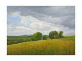 Wiltshire Landscape, Along the Wessex Ridgeway, 2010 Giclee Print by Peter Breeden