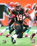 Cincinnati Bengals - Brandon Tate Photo Photo