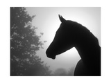 Closeup Image Of A Refined Arabian Horse'S Profile Against Heavy Fog And Sunrise Print by Sari ONeal