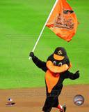 Baltimore Orioles Photo Photo