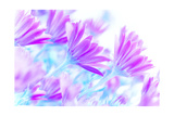 Fresh Purple Daisy Flowers Field, Art Work, Gentle Floral Background, Spring Time Blooming Prints by Anna Omelchenko