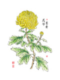 Ink Painting Of Chinese Chrysanthemum Translation: The Blossom Of Prosperity Prints by  yienkeat