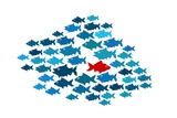One Fish Swim In Opposite Direction, Dare To Be Different Concept Affiches par  mypokcik