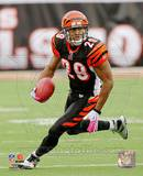 Cincinnati Bengals - Leon Hall Photo Photo