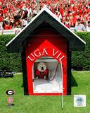 Georgia Bulldogs Photo Photo