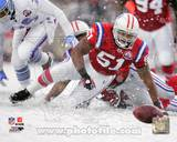 New England Patriots - Jerod Mayo Photo Photo