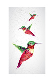 Humming Bird Geometric Illustration Prints by  cienpies
