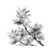 Chinese Traditional Ink Painting, Bamboo On White Background Premium Giclee Print by  elwynn