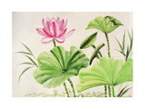 Watercolor Painting Of Pink Lotus Flower Poster by  Surovtseva