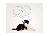 Cute Black And White Border Collie Lying And Dreaming About A Bone In A Thought Bubble Prints by  ra2studio