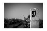 White Column On A Vineyard Background Posters by  tashatuvango