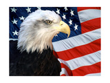 American Bald Eagle In-Front Of The American Flag Poster von  mikeledray
