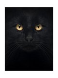 Close-Up Of A Black Cat Looking At The Camera, Isolated On White Posters by  Life on White