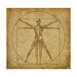 Vitruvian Human Diagram Grunge Medical Chart Plakat af digitalista