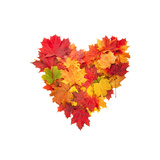 Colored Autumn Leaves In Heart Shape Isolated On White Background Art by  Jag_cz